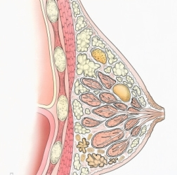 breast-cysts-causes-and-treatment